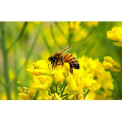 Bee Propolis – what's the buzz?